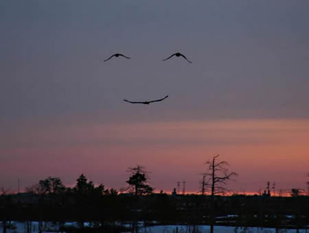 Bird Smile picture