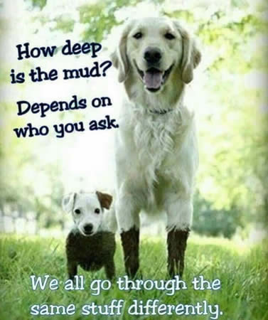 How Deep Is The Mud picture
